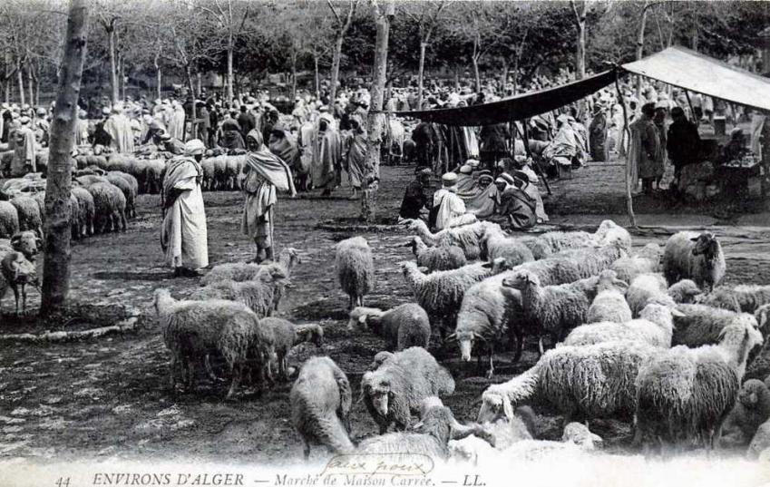 Alger maison carree marche aux moutons