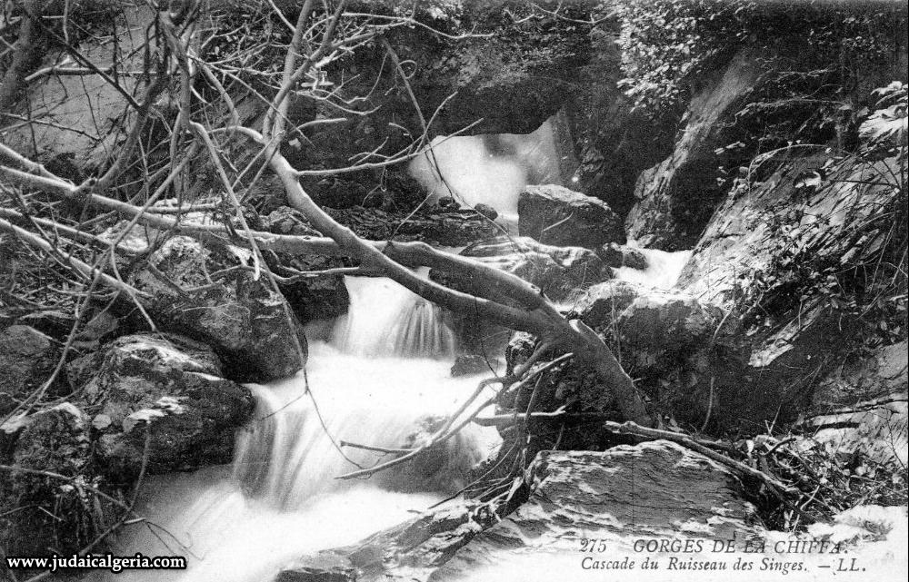 Gorges de la chiffa cascade du ruisseau des singes