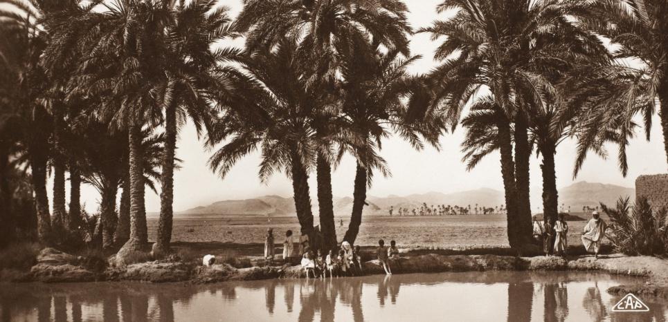 Une oasis pres debiskra en 1920